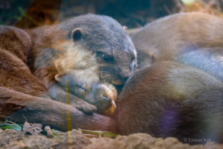 zoo-otters_